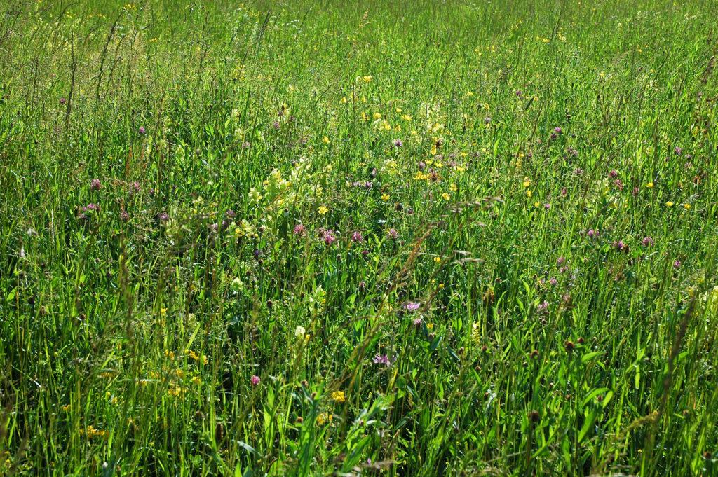 pâturages à la flore alpine diversifiée pour un lait de qualité